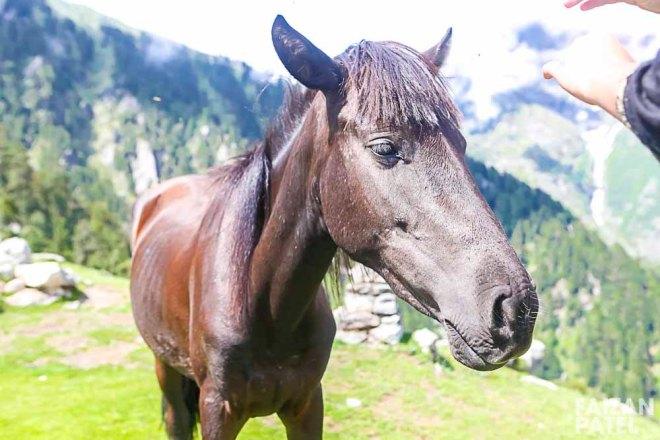 The Wild Horse posing